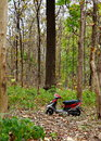 Scooter and forest a standing in midst of Royalty Free Stock Photos