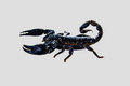 Scorpion black scorpio on white isolated Stock Photos