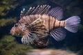 Scorpion fish underwater close up scorpionfish lionfish or zebrafish Royalty Free Stock Photos