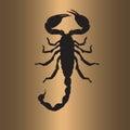 Scorpion flat art illustration