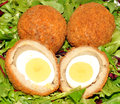 Scotch eggs one cut in half showing the boiled egg on a salad leaf background Royalty Free Stock Image