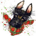 Scotch terrier dog T-shirt graphics, Scotch terrier illustration with splash watercolor textured background.