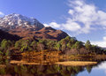 Scots pines(Pinus sylvestris) loch Clair,Scotland Royalty Free Stock Photo