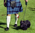Scottie dog and kilt Royalty Free Stock Images