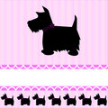 Scottish Terrier dog card Stock Photo