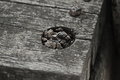 Scrap wood Royalty Free Stock Photo