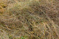 Scraps of hay in a field waiting to decompose Royalty Free Stock Image
