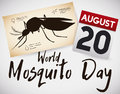 Scroll with Female Mosquito and Calendar for Mosquito Day, Vector Illustration