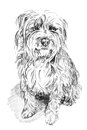 Scruffy dog sketch Stock Image