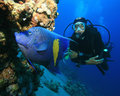 Scuba Diver and Angelfish Stock Photos