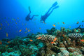Scuba Diver explores Beautiful Coral Reef Royalty Free Stock Photo