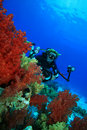 Scuba Diver explores coral reef with his camera Royalty Free Stock Images