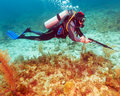 Scuba diver with spear gun near coral bottom Royalty Free Stock Photography