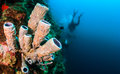 Scuba diver and tube sponge divers swim past a on a reef wall Royalty Free Stock Image