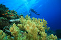 Scuba Divers explore coral reef Stock Image