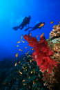 Scuba Divers explore coral reef Stock Images