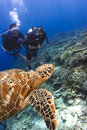 Scuba divers swimming with turtle Royalty Free Stock Photography