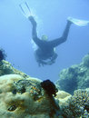 Scuba diving adventure Stock Photography
