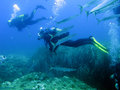 Scuba diving in mediterranean sea with fishes known as barracudas Royalty Free Stock Photo