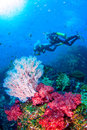 Scubadiving Similan,North Andaman Sea Thailand. Royalty Free Stock Photo