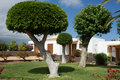 Sculpted trees in a Garden Stock Image