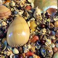 Sea ​​shells colorful and beautiful shells Stock Images
