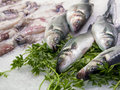 Sea ​​bass in a fish shop in italy Royalty Free Stock Image
