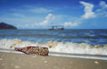 Sea acorn colony on a brown glass bottle dumped pollute at the sand beach,blurred splash of sea wave and blue sky in background Royalty Free Stock Photo