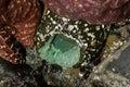 Sea anemone clinging to rock photographed on the oregon coast Stock Photos