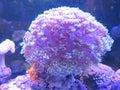 Sea anemone in nha trang department of oceanography vietnam Stock Images