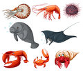 Sea animals illustration of different types of Royalty Free Stock Photos