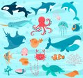 Sea animals vector cartoon ocean characters crab, funny octopus and whale underwater illustration marine set. Cute Royalty Free Stock Photo