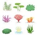 Sea aquatic fauna underwater plants and corals. Vector colorful ocean element