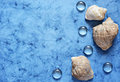 Sea background blue with shells Royalty Free Stock Photo