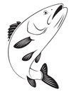 Sea bass the figure shows Royalty Free Stock Photo