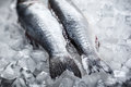 Sea bass on ice Royalty Free Stock Photo
