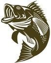 Sea Bass jumping