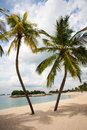 Sea beach palms on the island of Sentosa in Singapore. Royalty Free Stock Photo