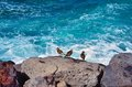 Sea birds boulders ocean Stock Images