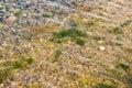 Sea bottom with pebbles and algea. Royalty Free Stock Photo