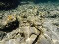 Sea bottom Royalty Free Stock Photo