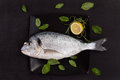 Sea bream on black plate with herbs. Royalty Free Stock Image