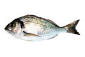Sea Bream Fish Stock Photos