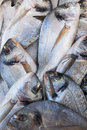 Sea bream fish for sale on market fresh mediterranean of marseille france Stock Photo