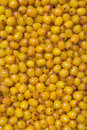 Sea-buckthorn Stock Photos