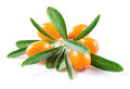 Sea buckthorn berries isolated on white background Stock Photography