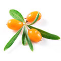 Sea buckthorn berries isolated on the white background Royalty Free Stock Images