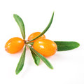 Sea buckthorn branch isolated on the white background Stock Photo