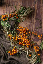 Sea buckthorn on a branch Royalty Free Stock Photo