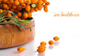 Sea buckthorn branch of ripe berries on a white background Royalty Free Stock Photography